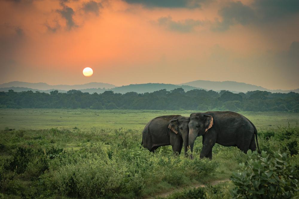 reasons to visit sri lanka the wildlife